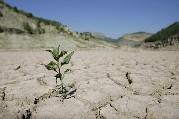 Drought hits fertiliser demand