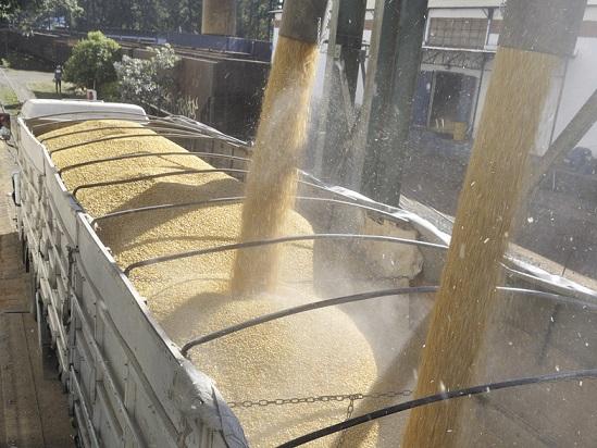 Corn in Brazil