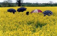 Could biodiesel from rapeseed oil be used as heating oil?