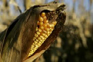 EPA must respond to requests to roll back corn-based ethanol