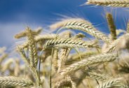 Bio-based chemicals on the rise