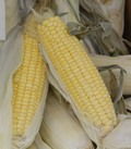 US corn stocks beat expectations