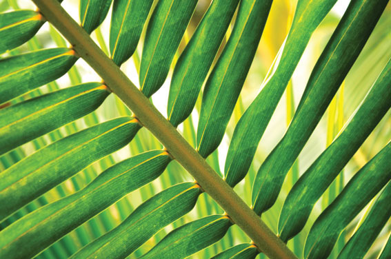 Palm leaves, Rex Features