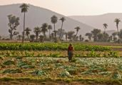 Woman working in an Indian farm