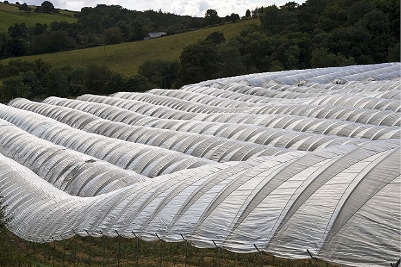 The so-called polytunnels used in agriculture, made out of PE. Pictured, farmland in the UK. Source: Tim Graham/robertharding/REX/Shutterstock