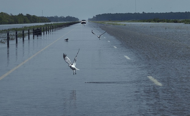 Seagulls take off as Red Cross vehicle navigates the flooded waters of eastbound I-10 highway, Texas. Source - Carol Guzy, ZUMA Wire, REX, Shutterstock