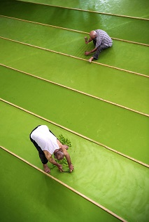 Turkish workers producing olive oil soap at a Turkish factory in Nizip