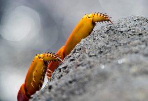 Picture source: Guenter Fischer/imageBROKER/REX/Shutterstock